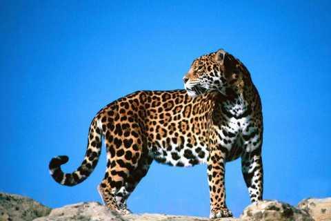 Big Cats 3.jpg